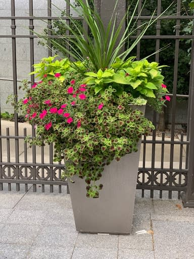 A perfect example of thrillers, fillers, and spillers in #ContainerGardening.
